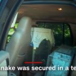 警察も絶句、怪しい車の中から拳銃のほか、とんでもないブツが…